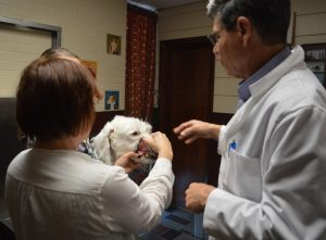 Pet Dental Care and Exams